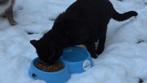 Karda kışta sokak hayvanlarını unutmadılar - Bursa Haberleri