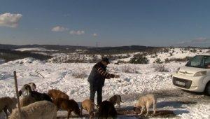 Karlı havada yüzü aşkın sokak köpeğini besliyor