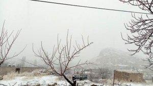 Kış ortasında açan erik ağacı şaşırttı
