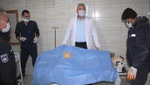 Köpek ameliyatlarına belediye başkanı da giriyor