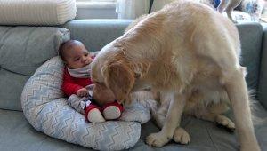 Köpek yeni doğan bebeği kimseyle paylaşmıyor - Bursa Haberleri