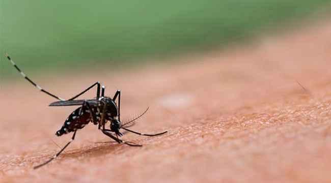 Korona bitmeden şimdi de sivrisinekten yayılan ölümcül bir virüs bulundu
