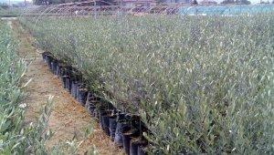 Manisa'da üreticilere yüzde 75 hibeli fidan desteği