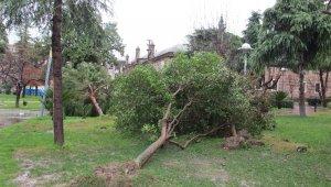 Manisa'daki fırtınanın hasarı gün ağarınca ortaya çıktı