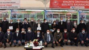 Milas'ta 300 bin ada çayı fidesi dağıtıldı