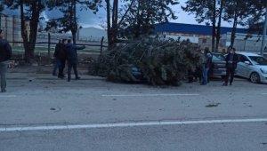Otomobilin üzerine ağaç devrildi - Bursa Haberleri