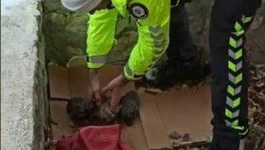 Polisten donmak üzere olan yavru köpeklere şefkat eli