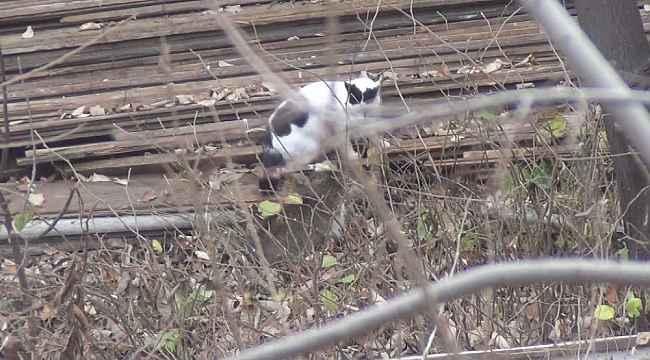 Psikopat kedi - Bursa Haberleri
