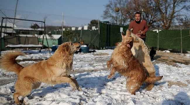 Sahipleri tarafından terk edilen köpeklerin karda oynaması tebessüm ettirdi - Bursa Haberleri