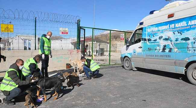 Şırnak'ta sokak hayvanları için doğaya yem bırakıldı