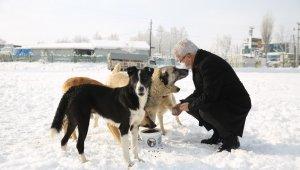 Soğuk havalarda sokak hayvanlarına Nilüfer Belediyesi sahip çıkıyor - Bursa Haberleri