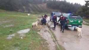 Soğukta aç kalan hayvanları jandarma elleriyle besledi - Bursa Haberleri