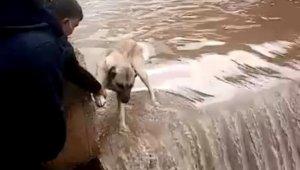 Su bendinde mahsur kalan köpeği canları pahasına kurtardılar