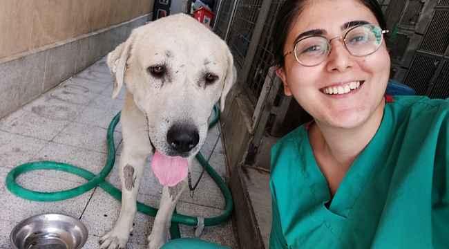 Umut kesilen köpeği veterinerler hayata döndürdü