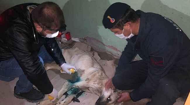 Yaralı köpeği tedavi ettiren jandarma koruma altına aldı