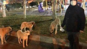 Yerköy'de gönüllüler sokak hayvanlarını besliyor