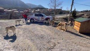 Adanalı kebapçı sokak hayvanlarını unutmadı