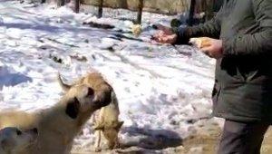 Belediye başkanı kendi elleriyle sokak hayvanlarını besledi