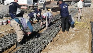 Çivril'de lavanta üretimi artıyor