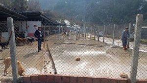 Devrek'te Sokak hayvanları barınağa yerleştirildi