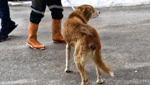 Tümörlü köpek sağlığına kavuştu - Bursa Haberleri