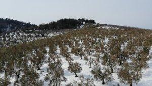 """Zeytinleri ağaçları yanan köylüler: """"Destek olunmazsa aç kalırız"""" - Bursa Haberleri"""