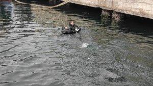 Denizde mahsur kalan kediye nefes kesen operasyon - Bursa Haberleri