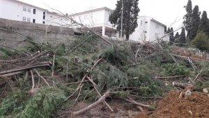 Hastane bahçesindeki ağaçların kesilmesine ilişkin valilikten açıklama