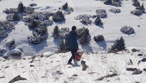 Kars'ta yaban hayvanları için doğaya yem bırakıldı