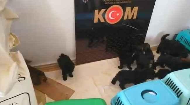 Şüpheli araçtan çıkanlar şoke etti: Yurtdışından getirdikleri 13 köpek yavrusu koruma altına alındı