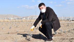 """Başkan Dinçer: """"Şehrimize yeni bir doğal yaşam alanı kazandırıyoruz"""""""