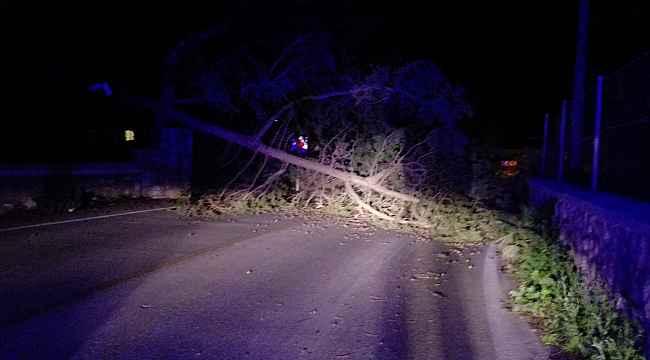Bodrum'da etkili olan fırtına hayatı olumsuz etkiledi