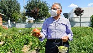 Büyükşehir, 2021'de tarım ve hayvancılığa özel önem verecek