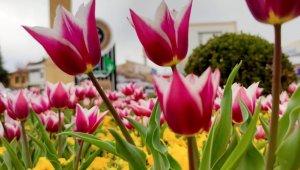 Çorum Belediyesinden 'Çorum'da Bahar' konulu fotoğraf yarışması