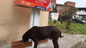 Germencik Belediyesi sokak hayvanları için beslenme noktaları kuruldu