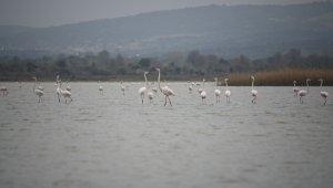 Göç eden flamingolar Çanakkale Tarihi Ala'nda durakladı