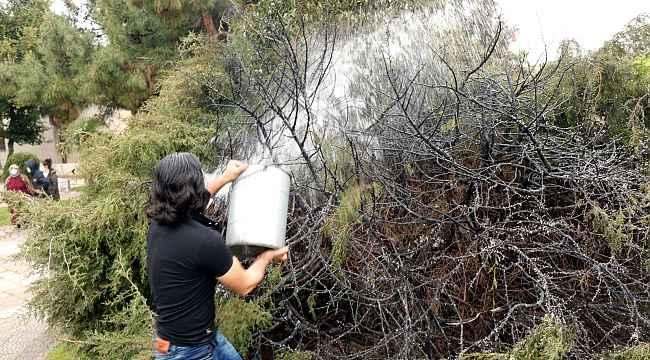 Güpegündüz ağacı yakıp kaçtı