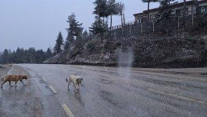 Karabük'te Nisan ayında kar sürprizi
