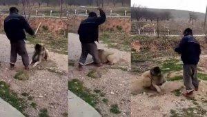 Köpeğini sopayla döven şahıs büyük tepki çekti