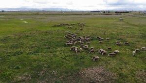 Köyün 3 bin hayvanı var, meraları ellerinden alındı - Bursa Haberleri