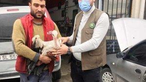 Kütahya'da yaralı leylek tedavi altına alındı