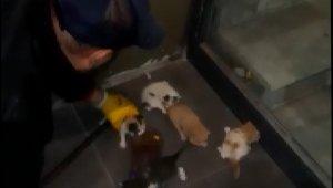 Mahsur kalan 5 yavru kedi kurtarıldı