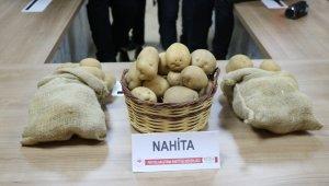 Niğde'de geliştirilen yerli patates tohumu Avrupa yolunda