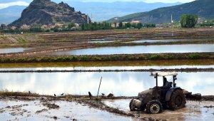 Osmancık'lı çeltik üreticilerine ekim ruhsatı uyarısı