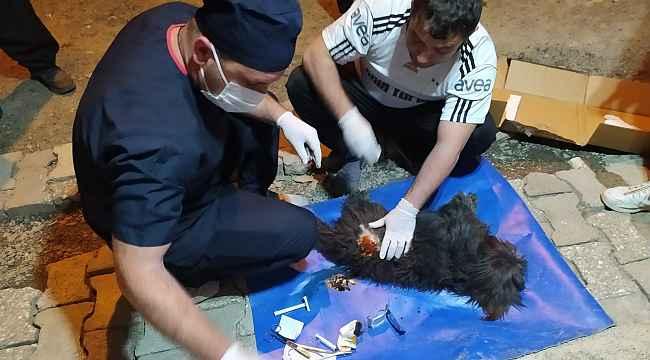 Pomeranian cinsi köpek saldırıya uğradı