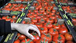 Rusya, Türkiye'den ithal edilen domates kotasının 300 bin tona çıkarılmasını önerdi