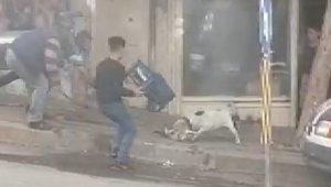 Şanlıurfa'da pitbull dehşeti