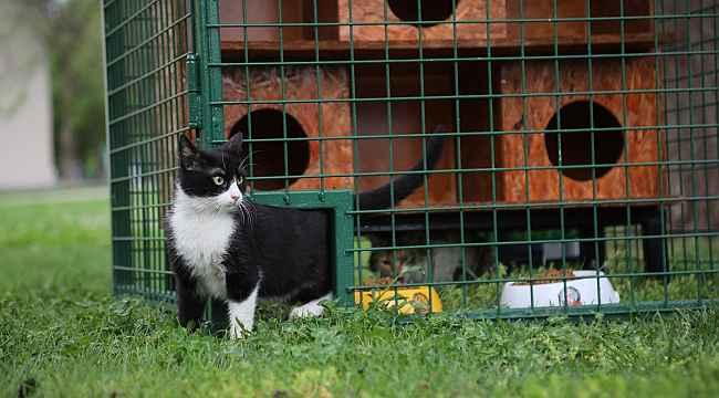 Seçim sandıkları kedi evi oldu