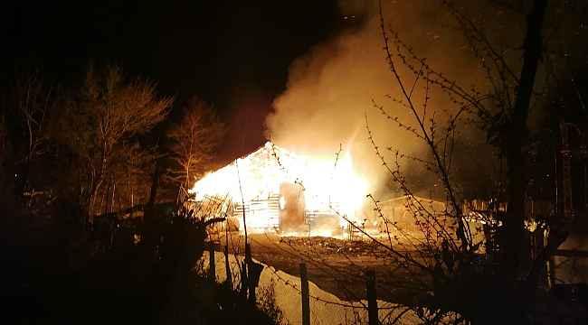 Sinop'ta ahır yangını: 12 büyükbaş hayvan telef oldu