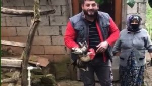 """Trabzon'da """"Anne"""" diye bağıran horoz kesilmekten kurtuldu"""